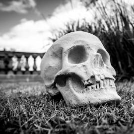 Stone Human Skull by the David Sharp Studio