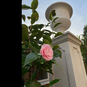 Stone Garden Vase, Artifex Sculptura, garden vase David Sharp Studios
